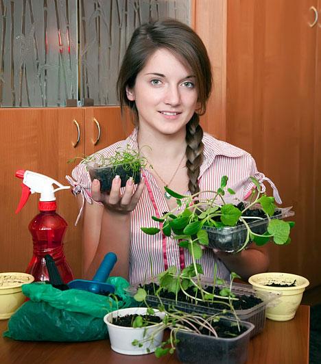 Cserepes növényekA cserepes növények életenergiája nem csak a chi áramlását és megtisztítását segíti elő, de gondozásuk egy kapcsolat ápolására és életben tartására is felkészít.