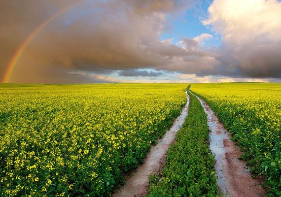 Akárcsak az Óz birodalmába vezető út, színes virágokkal és szivárvánnyal. Kattints ide a nagy felbontású képért!