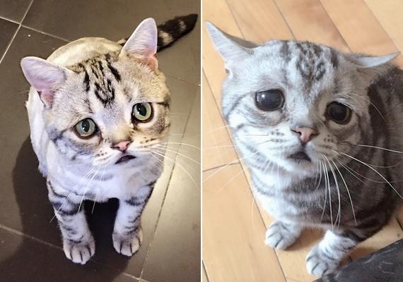 Bár Luhu szerető közegben él pekingi otthonában gazdájával és két másik macskával,Barherrel és Bardie-val, mégis annyira szomorú a tekintete, hogy az embernek összefacsarodik a szíve, ha ránéz.