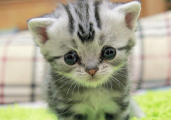 A cicának nem az érzelmei ülnek ki az arcára, egyszerűen ilyenek a vonásai: már egészen kicsi korában is szomorú szemei voltak.
