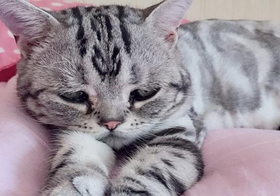Alvásidőben mintha azon mélázna, milyen értelmetlen is az élet.