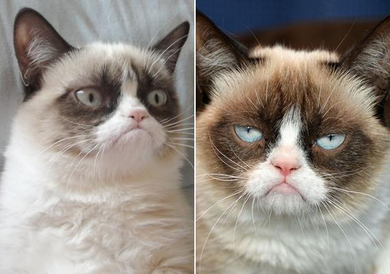 Korábban Grumpy Cat, a morcos macska volt az internet sztárja, akinek főszereplésével még film is készült - talán egy nap Luhu is ilyen karrierrel dicsekedhet majd.
