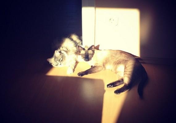 A 23 éves énekesnőnek két macskája is van, és a tenyerén hordozza őket.