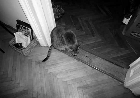 A rejtélyes macska fotóját a 24 éves SP osztotta meg, de a leírásból nem derült ki, hogy hozzá tartozik-e a cicus.