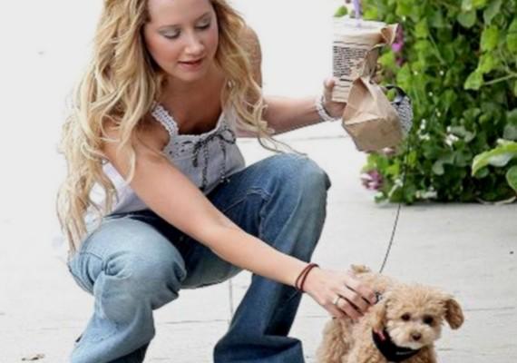 Ashley Tisdale birtokában is egy hasonló szőrgombóc van.