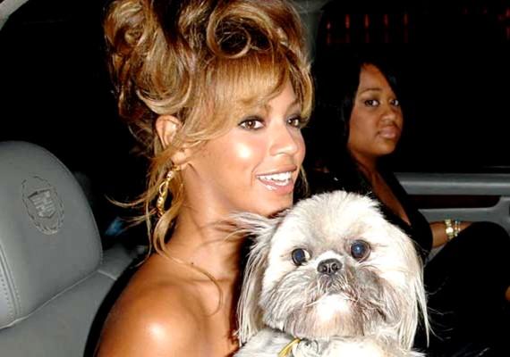 Beyoncé csak nagyon ritkán mutatkozik kistermetű házikedvencével.