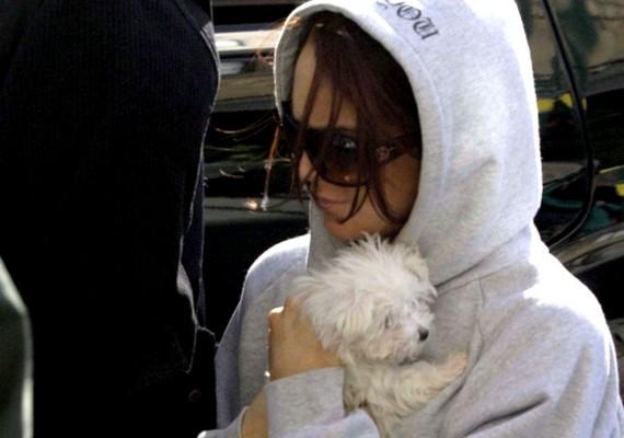 Lindsay Lohan apró, fehér szőrgombóca szeret odabújni a gazdihoz.