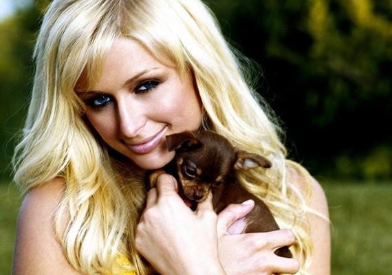 Paris Hilton odavan a kistermetű kutyákért - több csivavája is van, akik közül Tinkerbell a leghíresebb. Kedvenceinek egy komplett kis lakóparkot is építtetett.