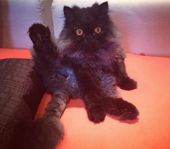 A Megasztárból ismert, 19 éves Hien cicája a furcsa, nyakatekert pózok mestere.