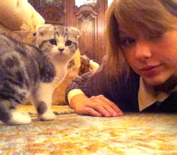 Íme, a tettes: Taylornak két macskája is van, Meredith az egyik.