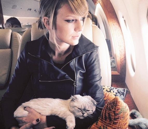 A másik cica Olivia, aki imád nagyokat szundítani gazdája ölében.