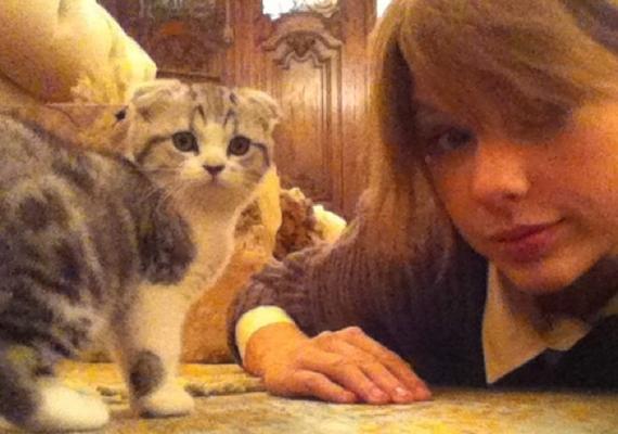 Taylor állítólagos másodállásai is kimeríthetetlen témának bizonyultak: a macskasuttogó bizonyára a legérdekesebb foglalkozás, amit neki tulajdonítottak.