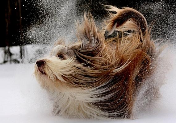 A tél mókás is tud lenni.Kattints a nagyobb felbontású képért! »