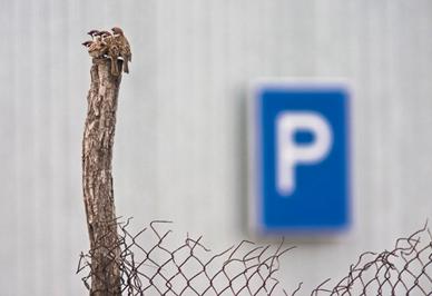Daróczi Csaba: Parkoló