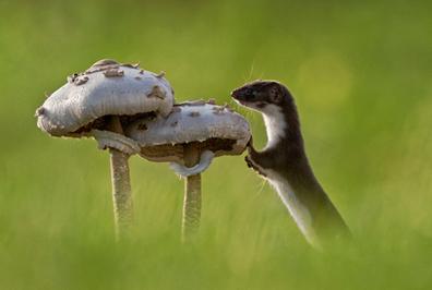 Kiss Ágnes: Csirik és a gombák