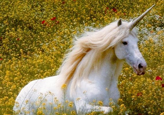 Az unikornis, más néven egyszarvú egy ló alakú, mesebeli lény, amelynek varázserőt tulajdonítottak az ókori mitológiában. A róla készült fotók mind manipuláltak.