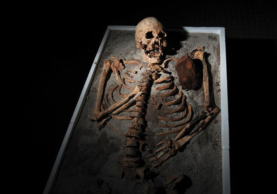 A csontvázat a Nemzeti Múzeumban állították ki.