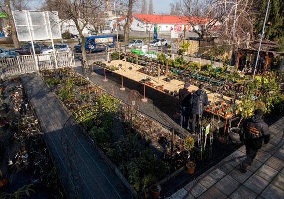 A legtöbb kertészeti bolt 200 négyzetméternél nagyobb, így családi vállalkozásként sem tarthat nyitva vasárnap. Azonban például egy élő növényeket értékesítő boltban gondozni kell a növényeket, így mindenképp be kell menni a boltba, csak éppen vevőt nem engedhetnek be. Ráadásul a forgalmuk jelentős részét ilyenkor bonyolították az ilyen jellegű boltok - egészen eddig.