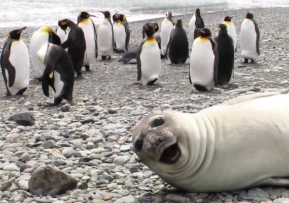 Nehogy már mindig csak a pingvineket fényképezzék!