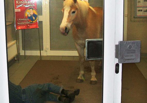 A nyomok alapján a ló megtörölte a lábát a lábtörlőn, mielőtt kifektette volna a gazdáját. Illedelmes paci.