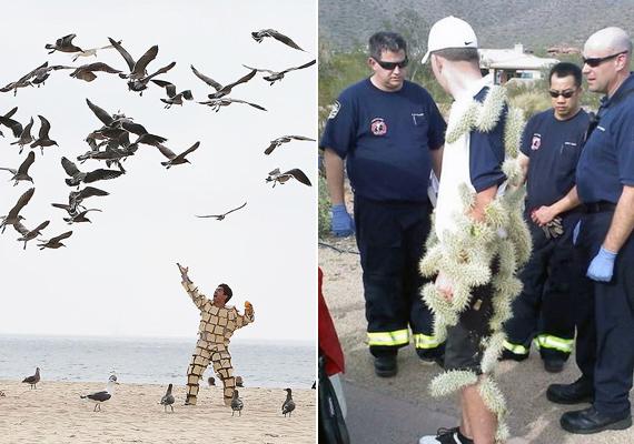A kenyérszeletes madáretetést és a kaktuszfelöltőt csakis bizarr öngyilkossági kísérletként tudnánk elképzelni. A tűzoltók arcából ítélve ők is.