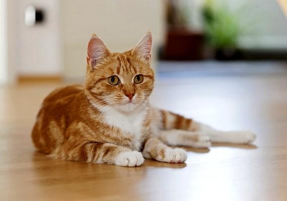 A hivatásos macskaelkapó házhoz megy, és betereli az engedetlen kedvenceket a hordozótáskába.