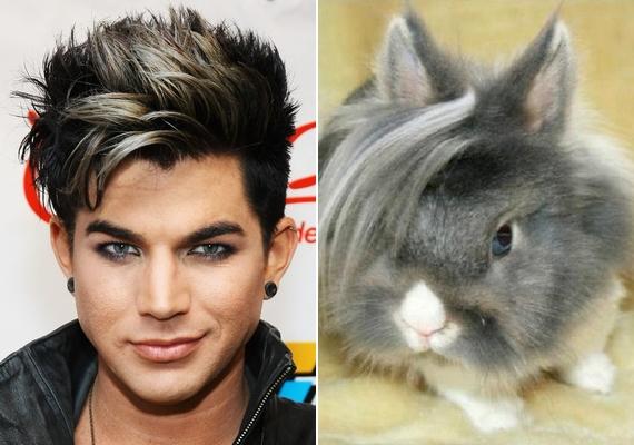 Adam Lambert rajongói között egy nyuszi is van.