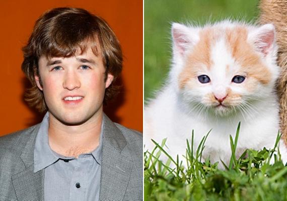 Haley Joel Osment olyan, akár egy riadt tekintetű kiscica.