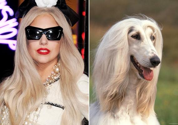 Íme, Lady Gaga kifestve és egy afgán agár smink nélkül.