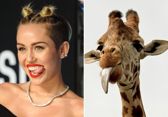 Miley Cyrusnak talán a vicces zsiráf a példaképe.
