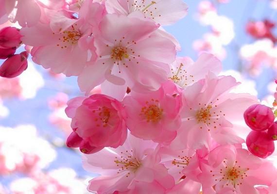 Tavaszi virágok.Kattints ide a nagyobb felbontású képért! »