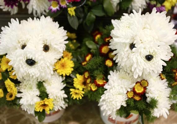 A cuki virágkutyusok minden rosszkedvre gyógyírt jelenthetnek. Kattints ide a nagy felbontású képért! »