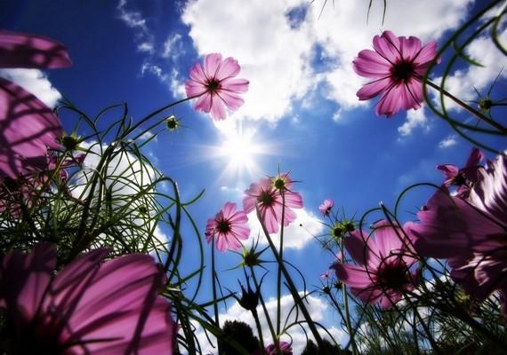 Csempéssz egy kis tavaszt a szobádba!Kattints ide a nagy felbontású képért! »