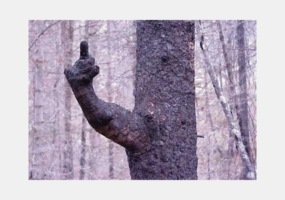 Ennél egyértelműbben nem fejezhetné ki egy fa, mit gondol arról, hogy viccelődnek rajta.