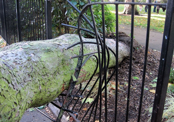 A hatalmas szélnek köszönhetően számtalan fa kidőlt, hasonló károkat okozva a környezetben.