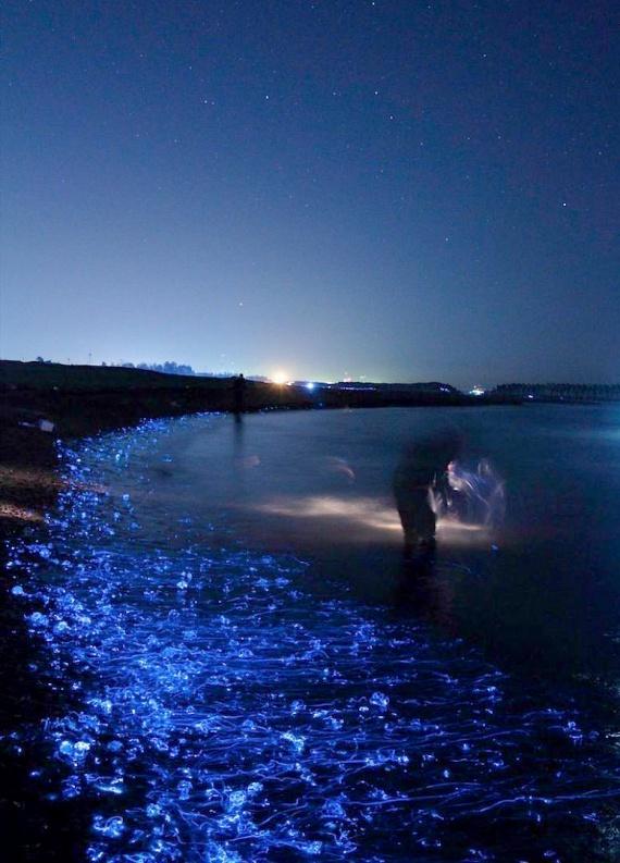 Pedig sötétben, vaku nélkül varázslatosan széppé teszik a víz környékét.