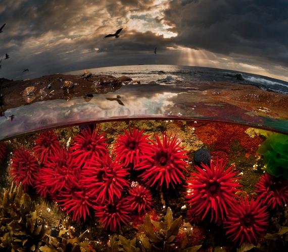 Míg a földről szemlélve a felszín tűnik érdekesebb és tartalmasabb környezetnek, a víz valójában színes és gazdag élővilágot rejt.