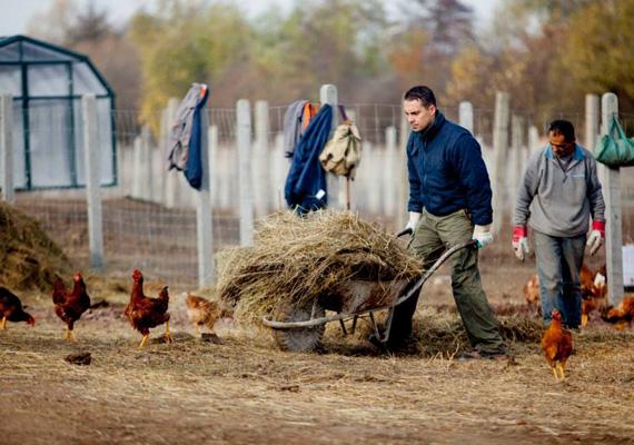 Vona Gábor a cigányokkal együtt dolgozik a tanyán. Korábban azt állította, hogy a vidéki cigányság egy része törvényen kívüli életet él, és ezen nem is szeretne változtatni.