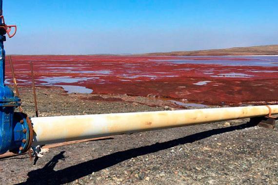 A Tajmiri Kisebbségek Szövetsége nevű aktivistacsoport szerint ha a Daldikanban lévő szennyeződés bejut a Kara-tengerbe folyó Pjaszinába, akkor nemcsak a környék vízi élővilágát fenyegeti majd kihalás, de egy fontos halállomány is veszélybe kerül.
