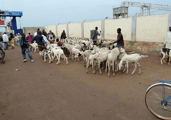 A kicsi nyugat-afrikai ország, Gambia az emelkedő tengerszint és az erózió miatt teljes egészében elveszítheti fővárosát, Banjult.