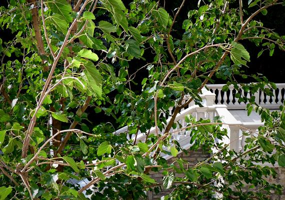 A Rózsadombra ódon villái miatt is érdemes ellátogatnod, mielőtt új lakóparkoknak adják át helyüket.