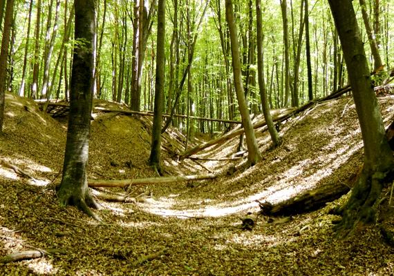 Az őrségi erdők mélye érintetlen a térerő szempontjából. A szalafői őserdőt semmiképp sem szabad kihagyni.