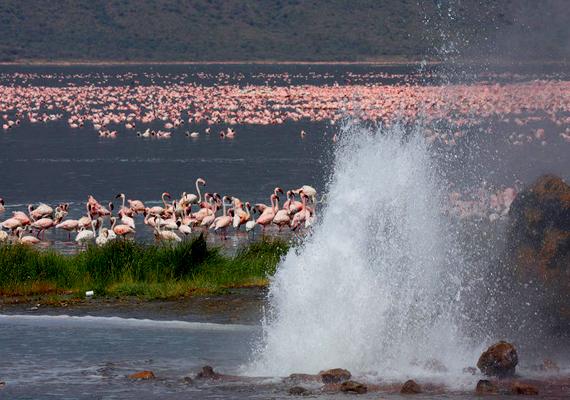 A kenyai Bogoria-tó gejzírjei is a tektonikus aktivitásnak köszönhetőek.