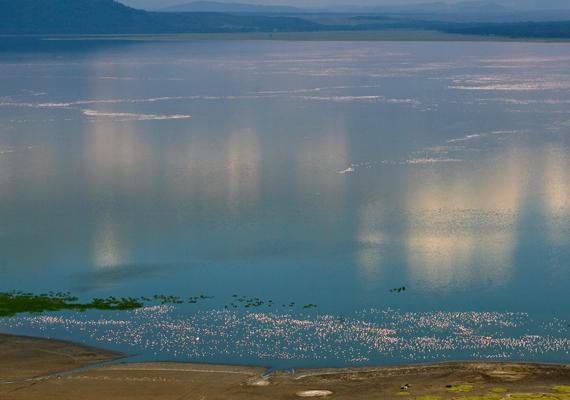 A Nakuru-tó Kenya Hasadékvölgy tartományában.