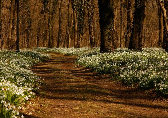 Az Alcsúti Arborétum története 1825-re vezethető vissza: ebben az évben kezdett el József nádor különleges növényfajokat telepíttetni ide - háromszázat honosított meg.