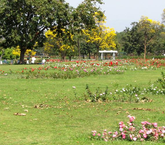 A chandigarh-i a legnagyobb rózsakert Indiában, több mint kétezer variációnak ad otthont.