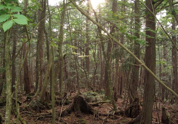 """Az erdőt a """"fák tengere"""" névvel is illetik, nem véletlenül. A sűrű növényzetnek és az állatok csekély számának köszönhetően hátborzongatóan csendes."""