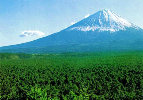 Első látásra senki sem gondolná, hogy a Fudzsi tövében található erdő számos tragédia színhelye. Nemcsak a természet, hanem az itt történt öngyilkosságok miatt morbid úti cél is.