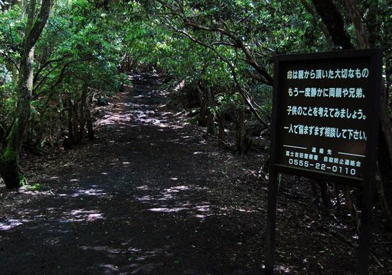 Az 1950-es évek óta már több mint ötszáz ember vesztette életét. Emiatt japán és angol nyelvű táblákat is kihelyeztek az erdőben, melyek arra hívják fel a figyelmet, hogy mindenki gondolja át újra, mire készül.