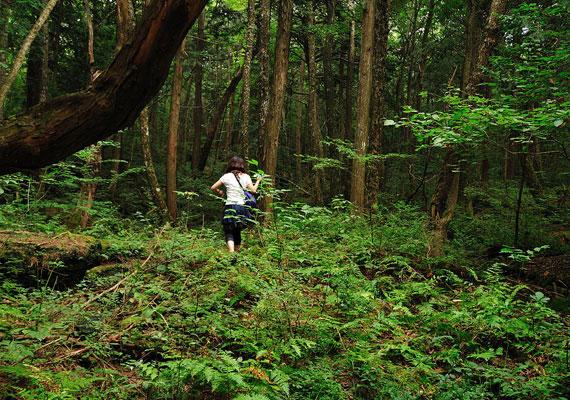 Az erdő nemcsak számos turistát vonz, hanem 1970-től már kereséseket is szerveznek a holttestek felderítésére. Ezek többnyire önkéntesek, rendőrcsapatok, valamint újságírók részvételével zajlanak.